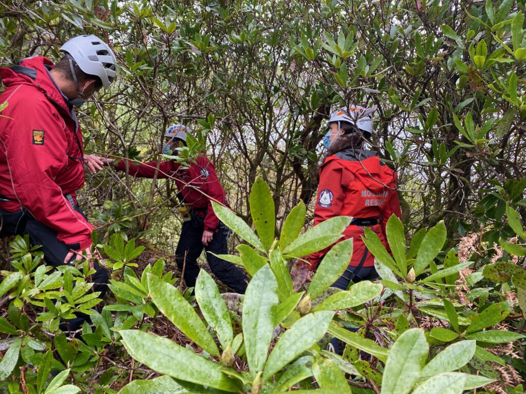 Team in the Rhododendrons